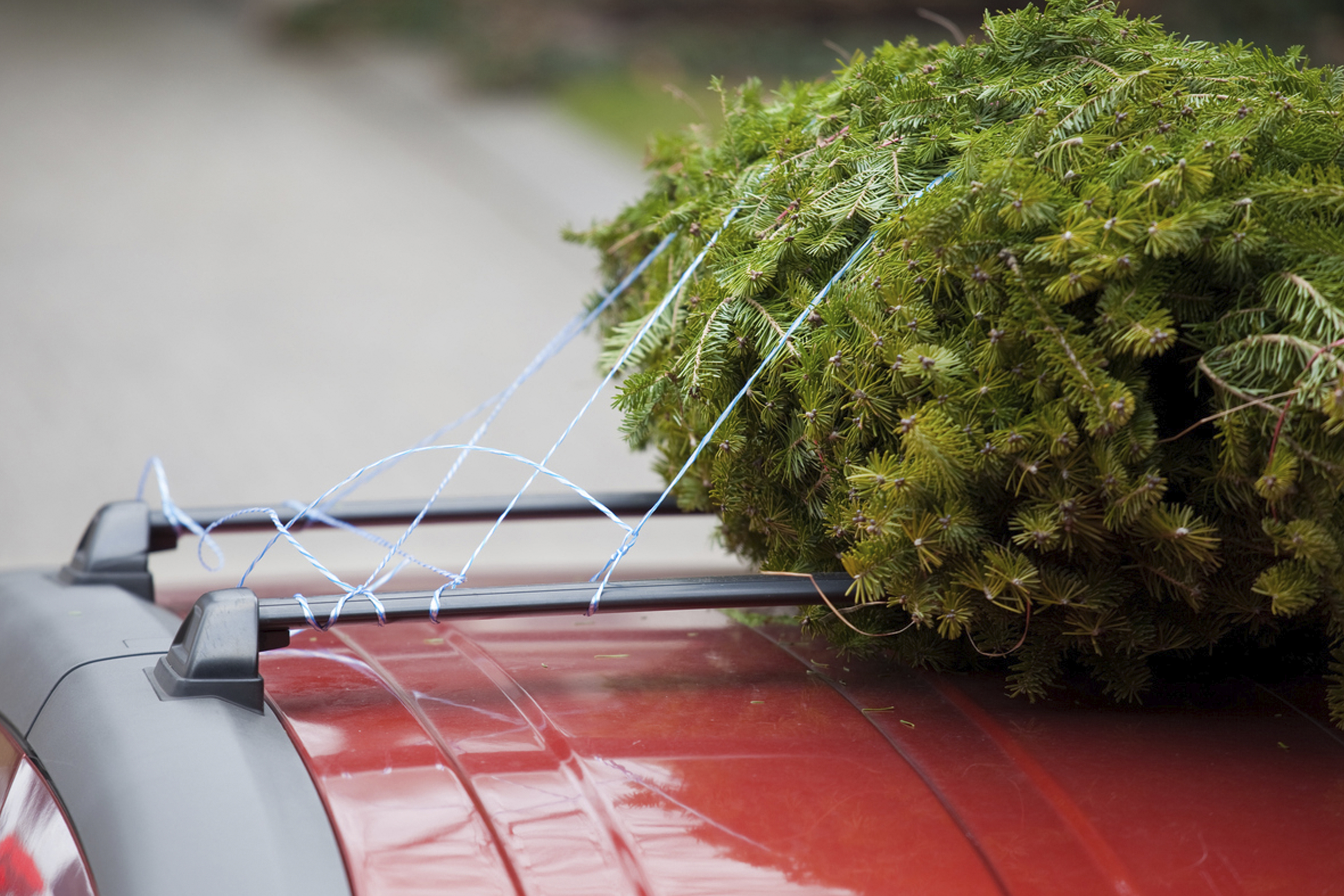 How To Safely Transport A Christmas Tree